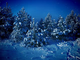 Christmas_wallpaper_siberianwinter.jpg